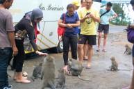 monkey forest lombok