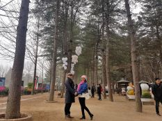 central korean pine tree lane